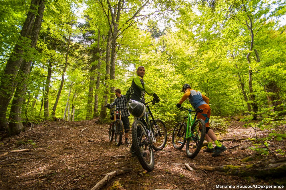 bikers-on-forest
