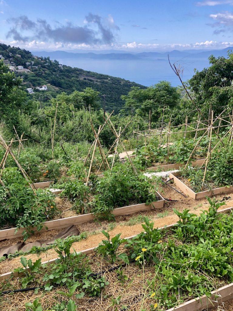 Pelion Homes_The organic garden