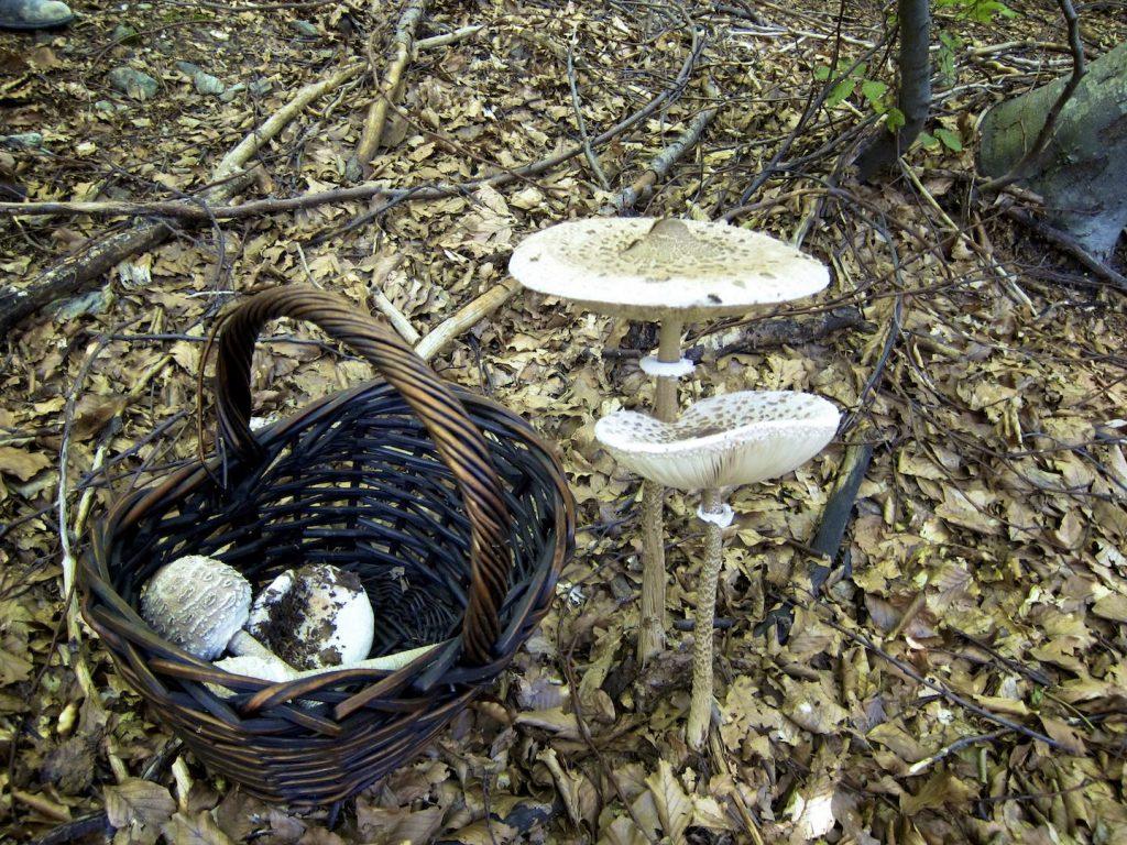 Mushroom_Hunting 02