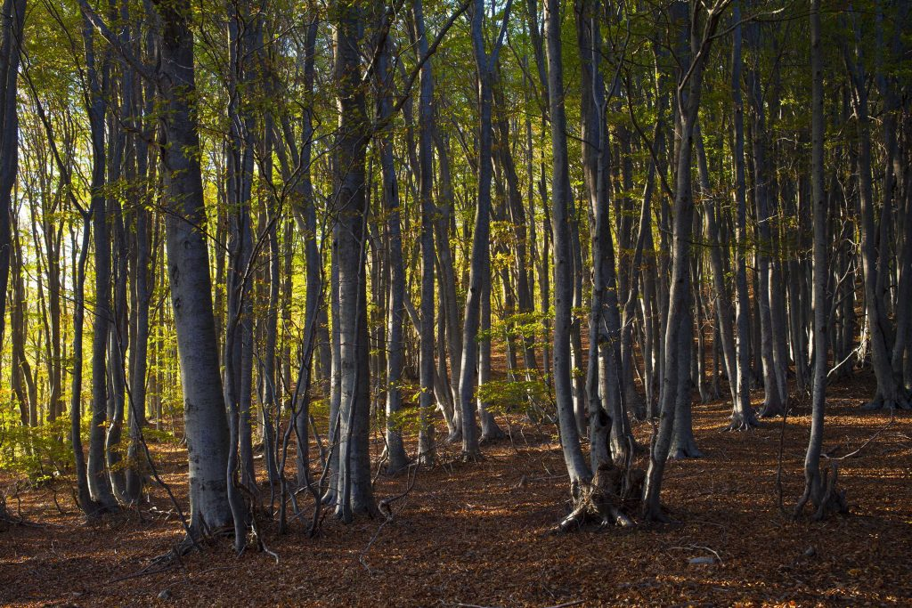 Lush forest in Pelion