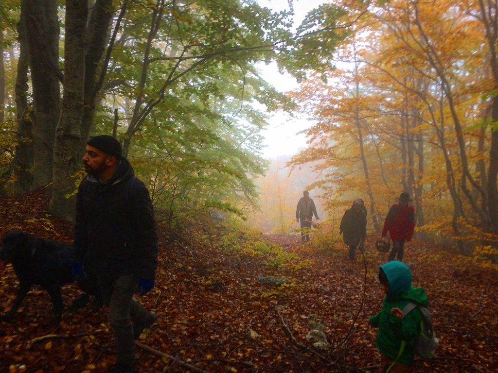 Trekking experience with Pelion Homes